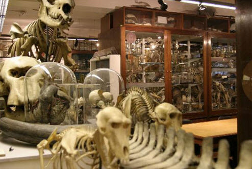 Inside the Grant Museum of Zoology