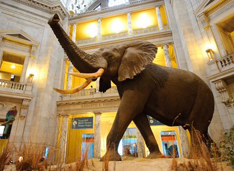 Elephant at the Natural History Museum